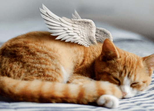 striped orange cat figure with angel wings